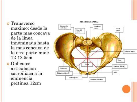 PPT   Anatomía de la pelvis PowerPoint Presentation   ID ...