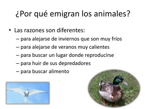 PPT   Animales que migran PowerPoint Presentation   ID:744698