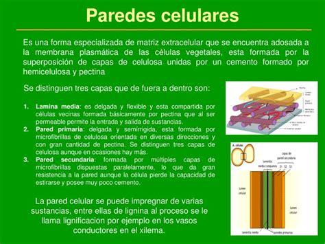 PPT   El medio interno celular PowerPoint Presentation ...