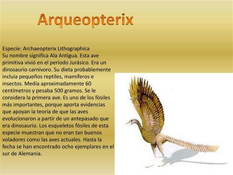 PPT   Especies gigantes de dinosaurios voladores como los ...
