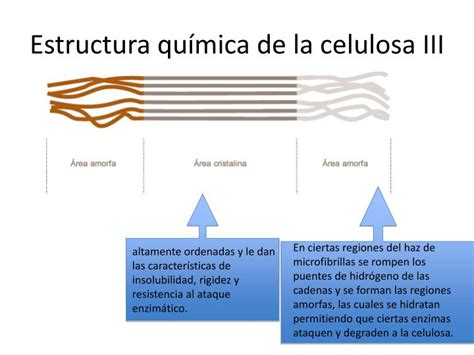 PPT   La Celulosa y las Celulasas: Importancia PowerPoint ...
