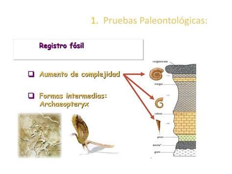 PPT   LA EVOLUCIÓN BIOLÓGICA PowerPoint Presentation, free ...