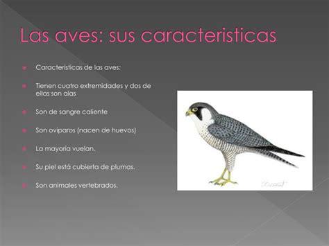 PPT   Las aves: sus caracteristicas PowerPoint ...