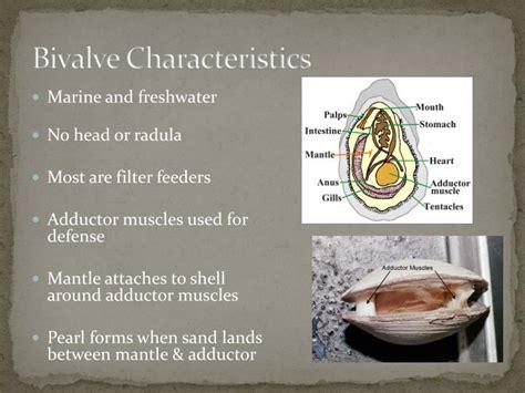 PPT   Phylum Mollusca Ch 12 – Molluscan Success PowerPoint ...