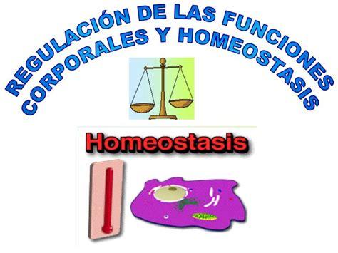 PPT   REGULACIÓN DE LAS FUNCIONES CORPORALES Y HOMEOSTASIS ...