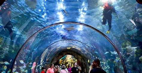 PRA New Orleans Venues: Aquarium of the Americas