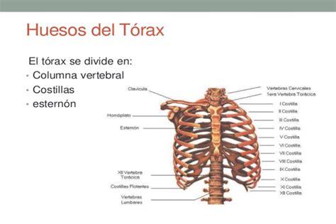 practico 3: Osteología Vertebral