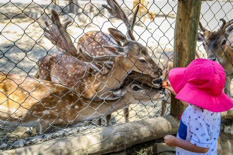 Precio Zoo   SEONegativo.com