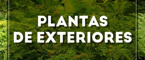 preguntas sobre Plantas Resistentes Al Sol Para Terrazas ...