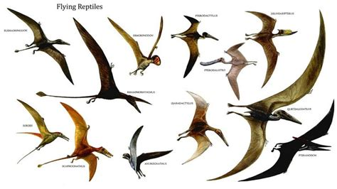 Prehistoric flying reptiles  Click to see larger.  | Paleo ...