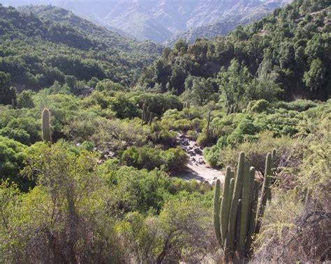 Presencia del bosque esclerófilo en la región ...