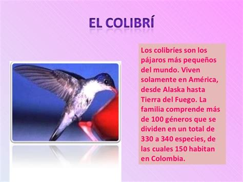 Presentacion De Colibri