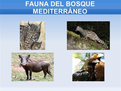 Presentación flora y fauna de andalucía