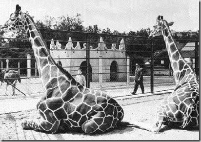 """Presentemente o """"Jardim Zoológico de Lisboa"""" conta com os ..."""