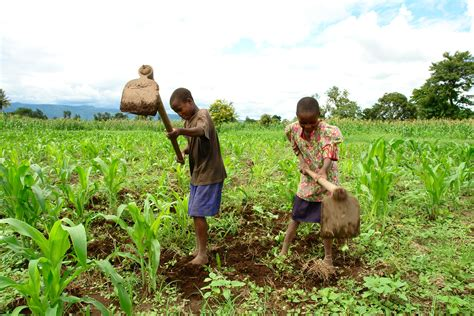 Preserving the Soil and Reaping Greater Harvests | Inter ...