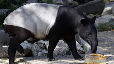 PressTV French zoo helps animals get through heatwave