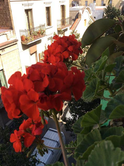 Primavera en la terraza | Flores, Primavera, Terraza