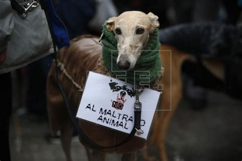 Primer grupo de voluntarios de protección animal velará ...