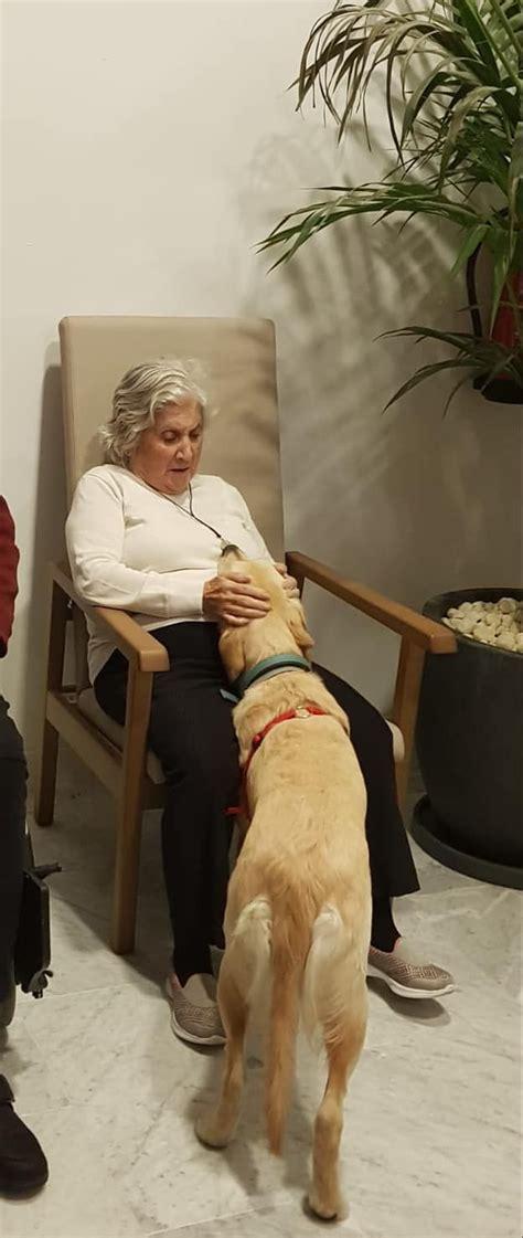 Primera sessió de terapia amb gossos a la residència i ...