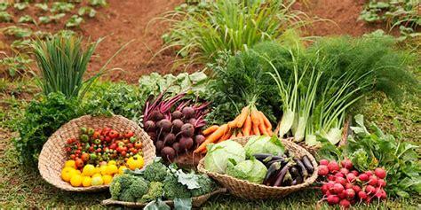 Primeros pasos para tu tienda online de agricultura