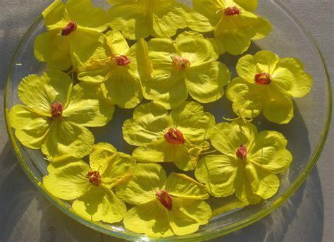 Primrose | Flower essences, Herbalism, Emotional healing