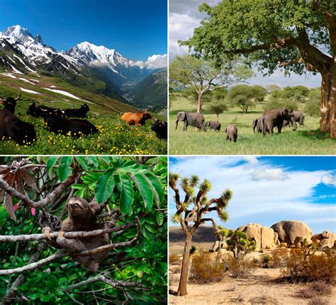 Principales tipos de ecosistemas terrestres   Maestrillo
