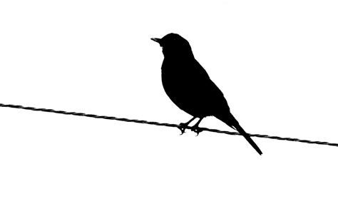 Printable Bird Silhouettes   ClipArt Best