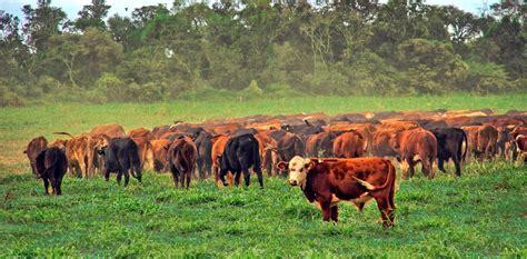 Productores ganaderos aseguran que las limitaciones a la ...