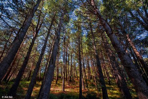 Profundidad de Campo: Bosque Mediterráneo