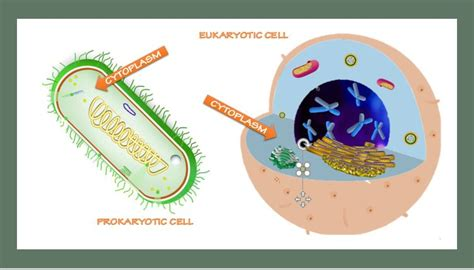 Prokaryotic and Eukaryotic Cells   SCIENTIST CINDY