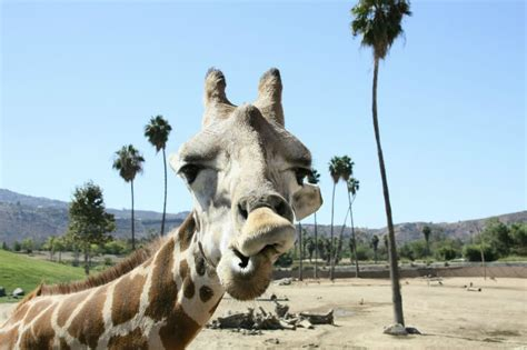Promo Code for San Diego Zoo & Old Town Trolley Package ...