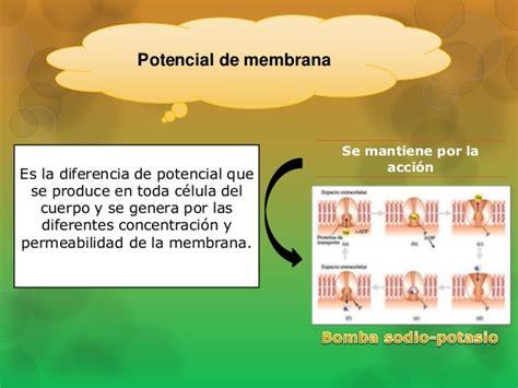 Propiedades Bioelèctricas de la membrana plasmática