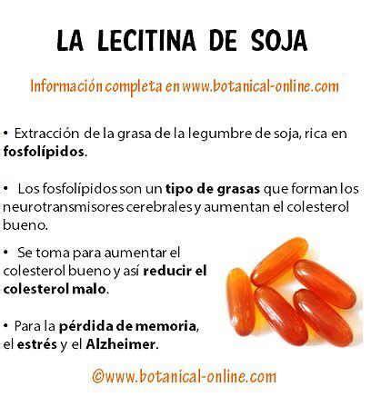 Propiedades de la lecitina de soja | Salud | Lecitina ...