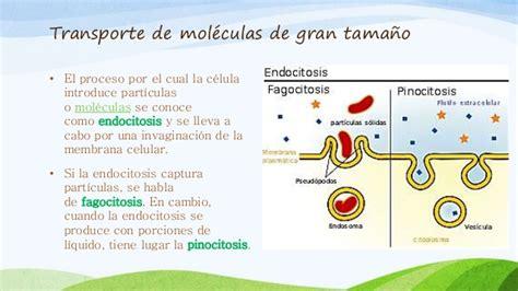 Propiedades y funciones de la membrana plasmatica