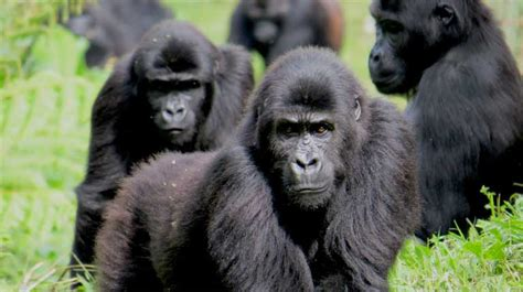 Proposed Trump policy threatens Critically Endangered ...