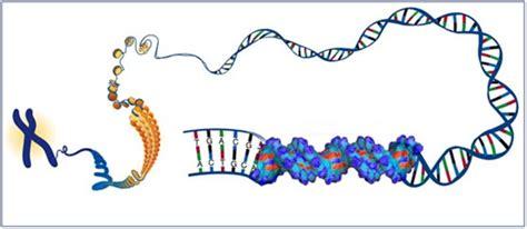 Proyecto Innovación: Técnicas de Biología Molecular