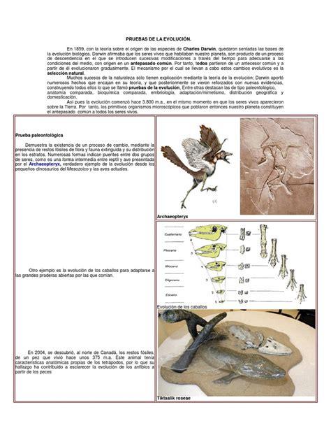 Pruebas Anatomicas de la Evolucion | Homología  biología ...