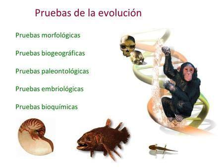 Pruebas de la evolución> | Evolucion, Metamorficas ...