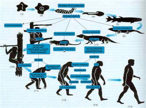 Pruebas de la evolucion  sin complentar