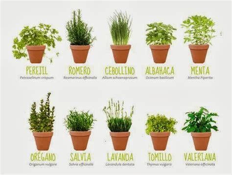 PS del Prado: Las plantas aromáticas que perfuman mejor ...