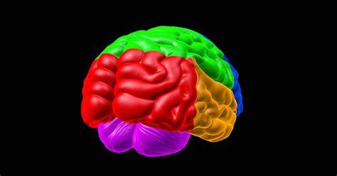 Psicología cognitiva: definición, teorías y autores ...