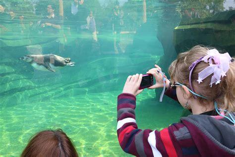 Public flocks back to Paris Zoo after six year break