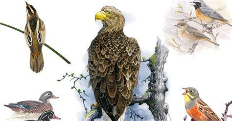 Publican el nuevo Atlas Europeo de las Aves Reproductoras