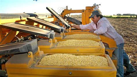 Pulseada en Rosario por el valor para  fijar  soja