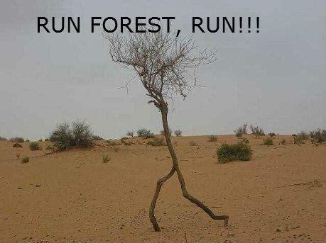 Pun Forest, Pun : funny