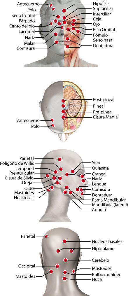 Puntos: cabeza   Acupuntura para adelgazar, Reflexología y ...