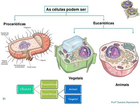 quais sao os tipos de células ? e suas classificação ...