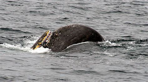 Quality, not quantity, important in whale food | Lost in ...