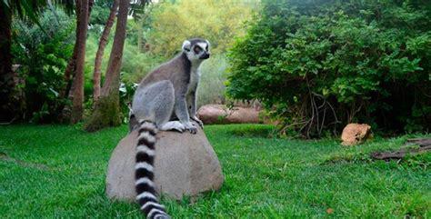 ¿QUÉ ANIMALES HAY EN BIOPARC FUENGIROLA?   Colectivia Blog ...