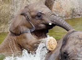 ¿QUÉ ANIMALES HAY EN BIOPARC VALENCIA?   Colectivia Blog ...